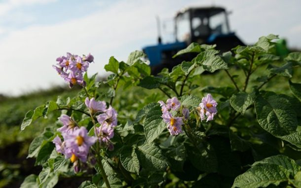 Helsingin Sanomat: Китай выращивает картофель на Луне, а финны — под землей